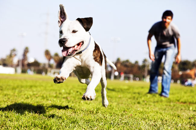 dog playing at park with owner
