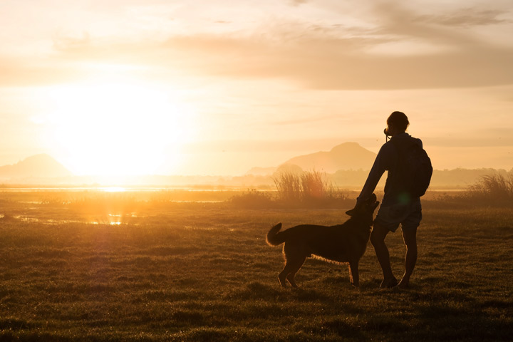 person walking their dog at dusk in rural area - nature